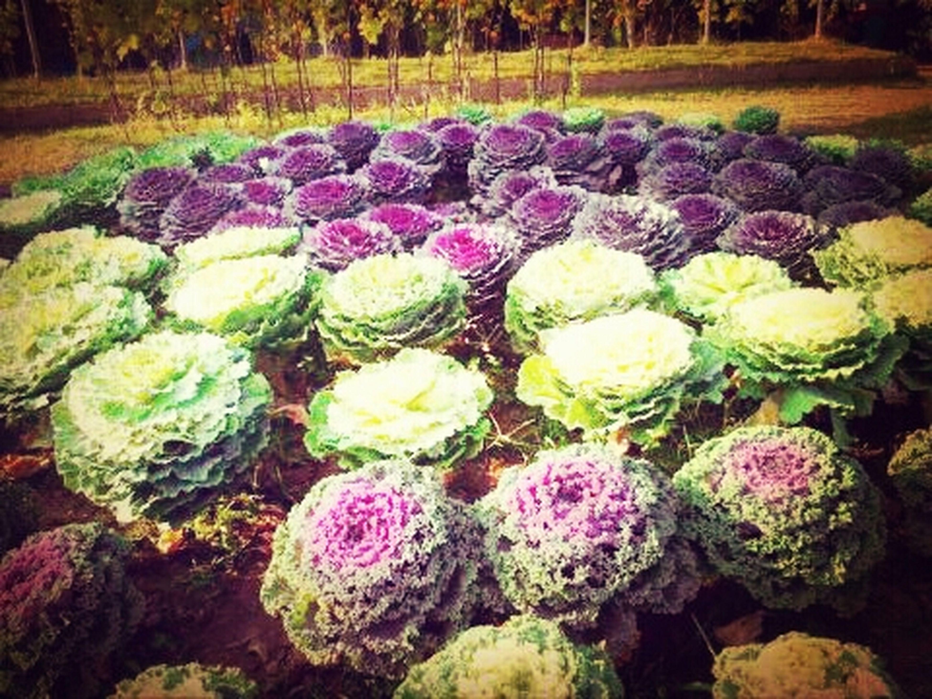 Flowers At Khow Kor