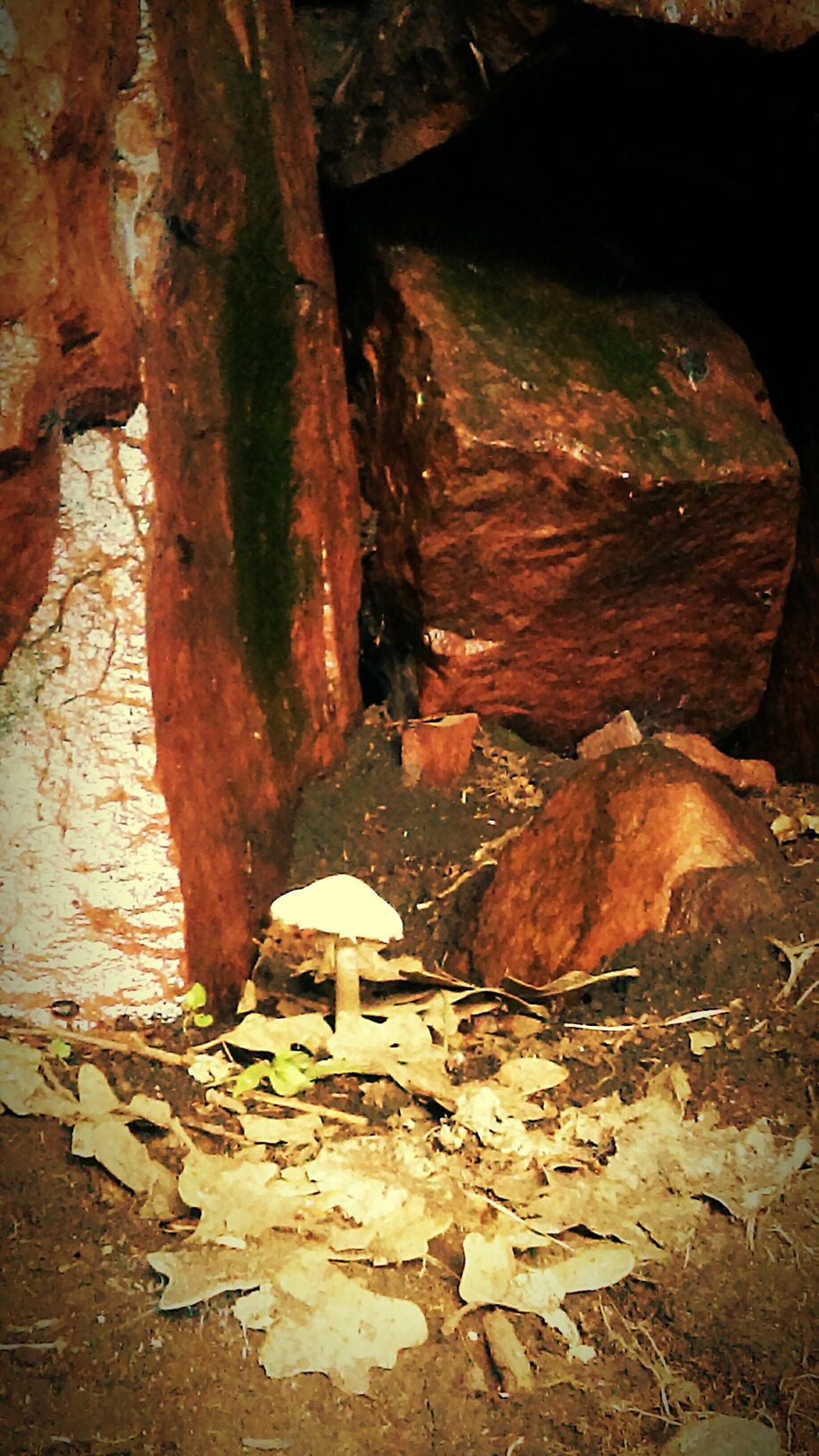 Forgottenparadise Mushroom Rockwall Outdoor Photography Nature Photography Nature A Walk In The Park Unexpected Nature Mushroom_pictures Alone Solitude Magic