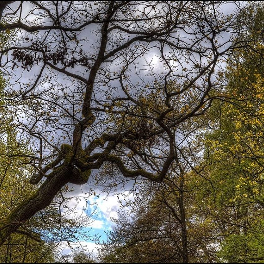 Tree Activity Eppingforest Clouds hdr hdrphotography highdynamicrange photomatix photography nofilter