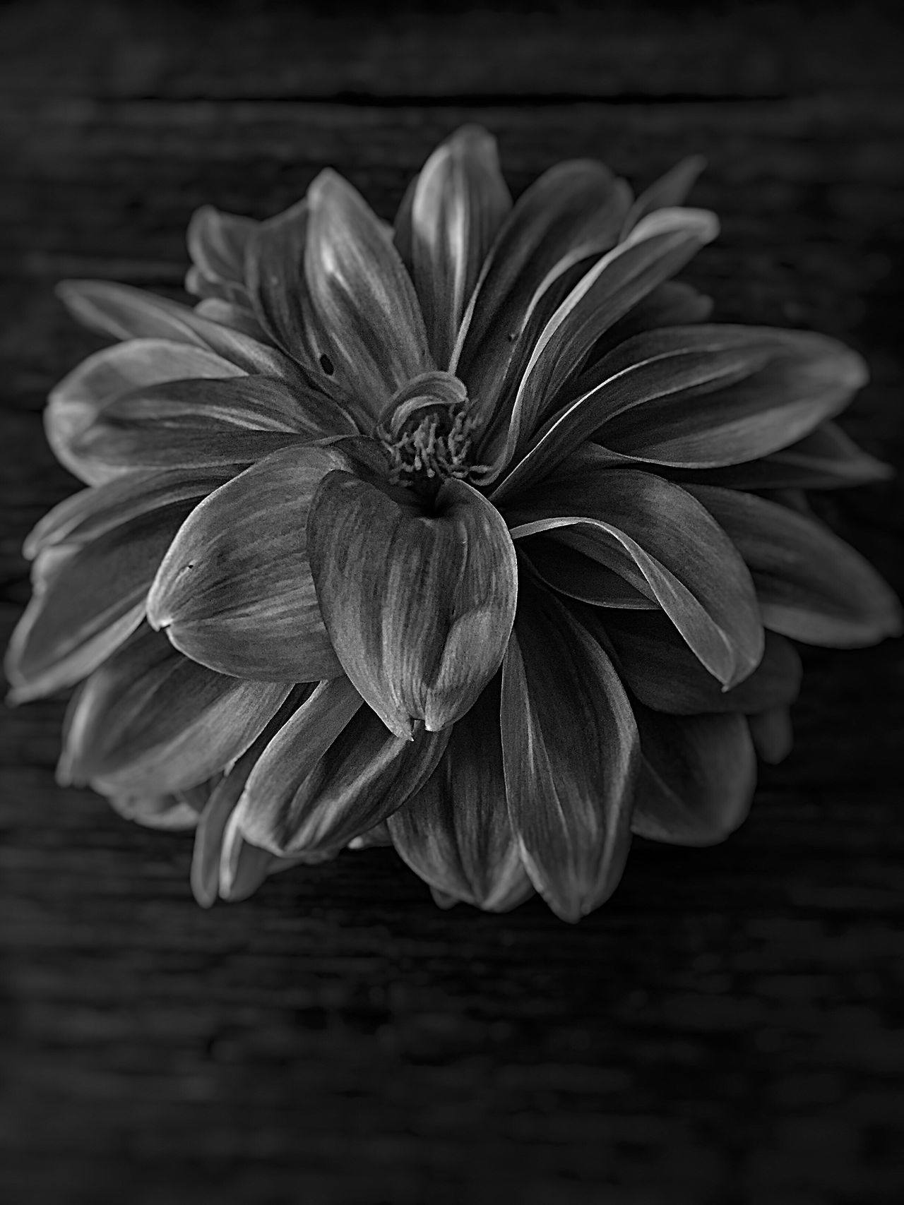 Flowers Flower Closeup Close-up On Wood Wood Blackandwhite Black And White Blackandwhite Photography Black And White Photography Blossom