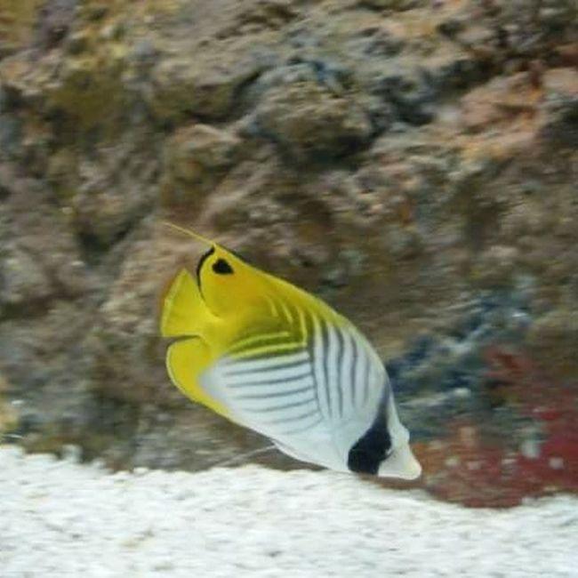 One Animal Animal Wildlife Yellow Underwater Sea Life Animal Fin Fish Aquarium Aquarium Life Niagara Falls Niagara Falls NY