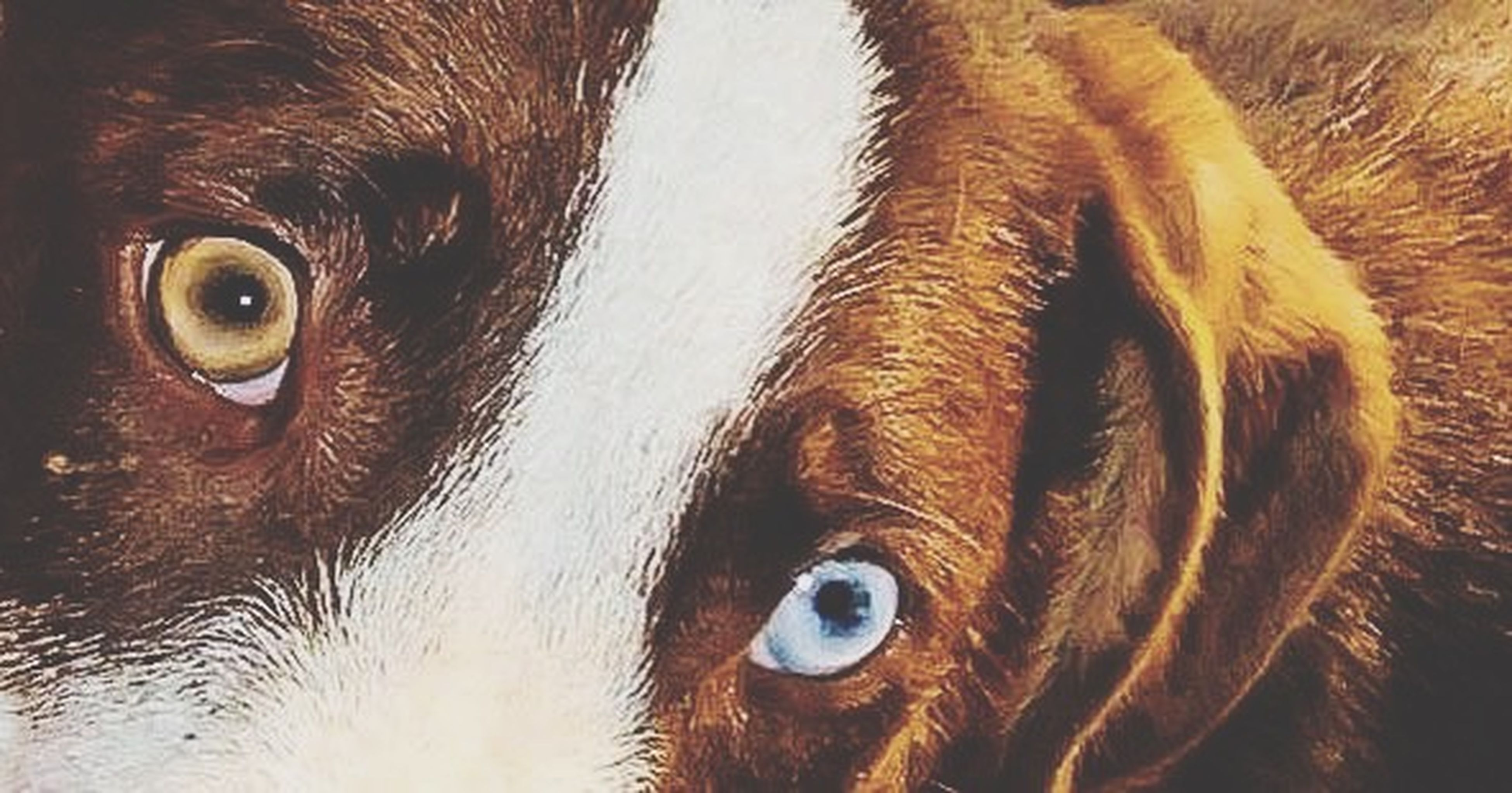 animal themes, domestic animals, one animal, mammal, animal body part, close-up, animal head, pets, animal eye, portrait, looking at camera, part of, dog, animal hair, full frame, indoors, extreme close up, backgrounds, no people, detail