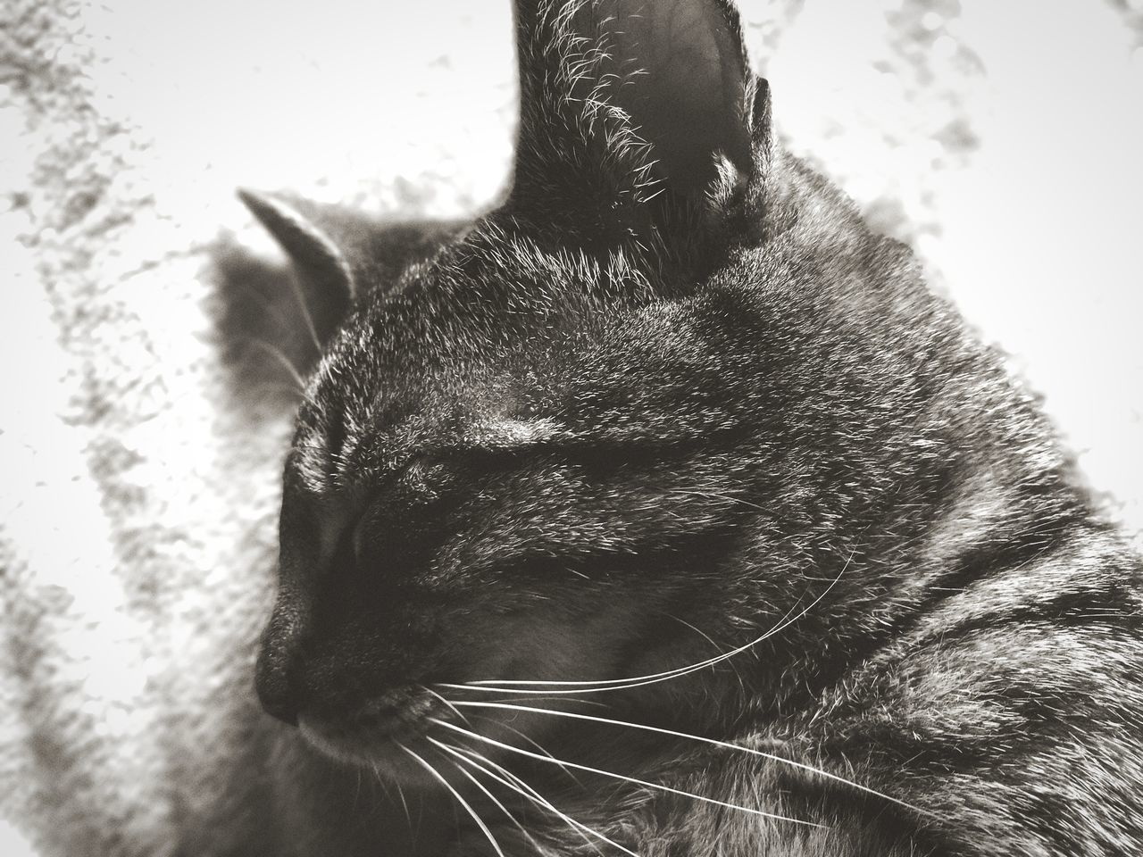 domestic cat, one animal, mammal, animal themes, domestic animals, no people, pets, feline, close-up, indoors, nature, day
