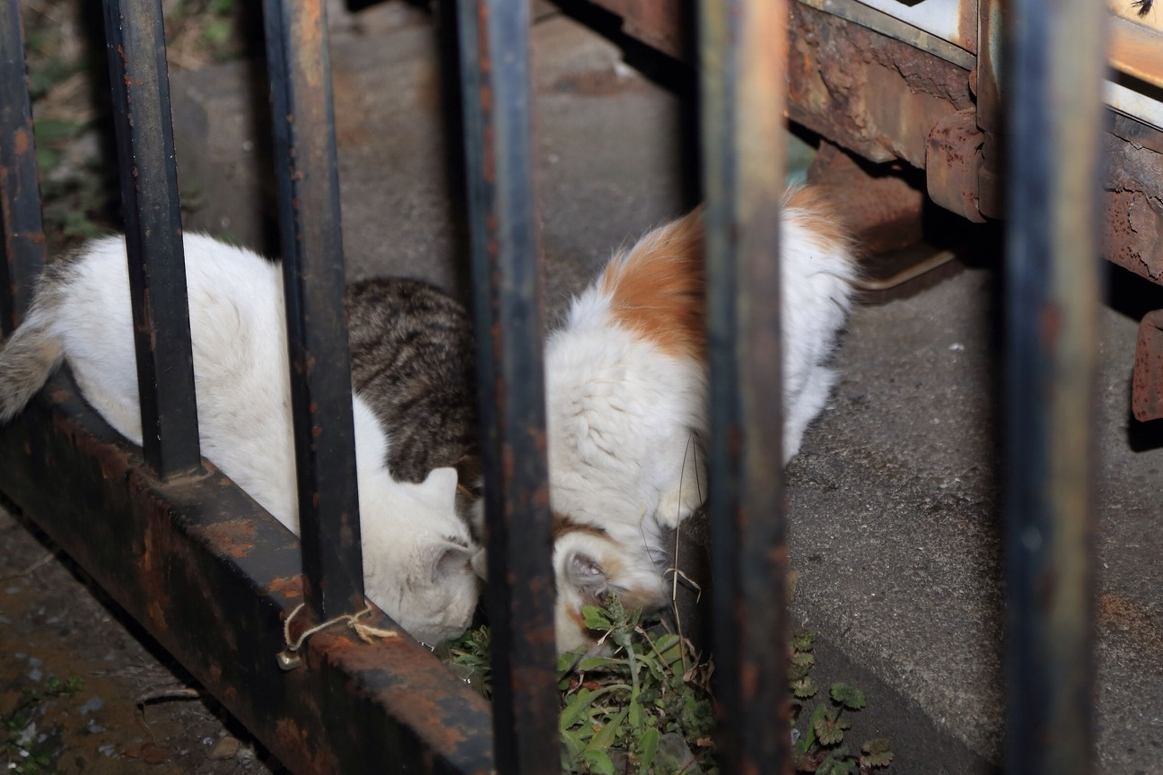 The Family Of A Stray Cat.⑷