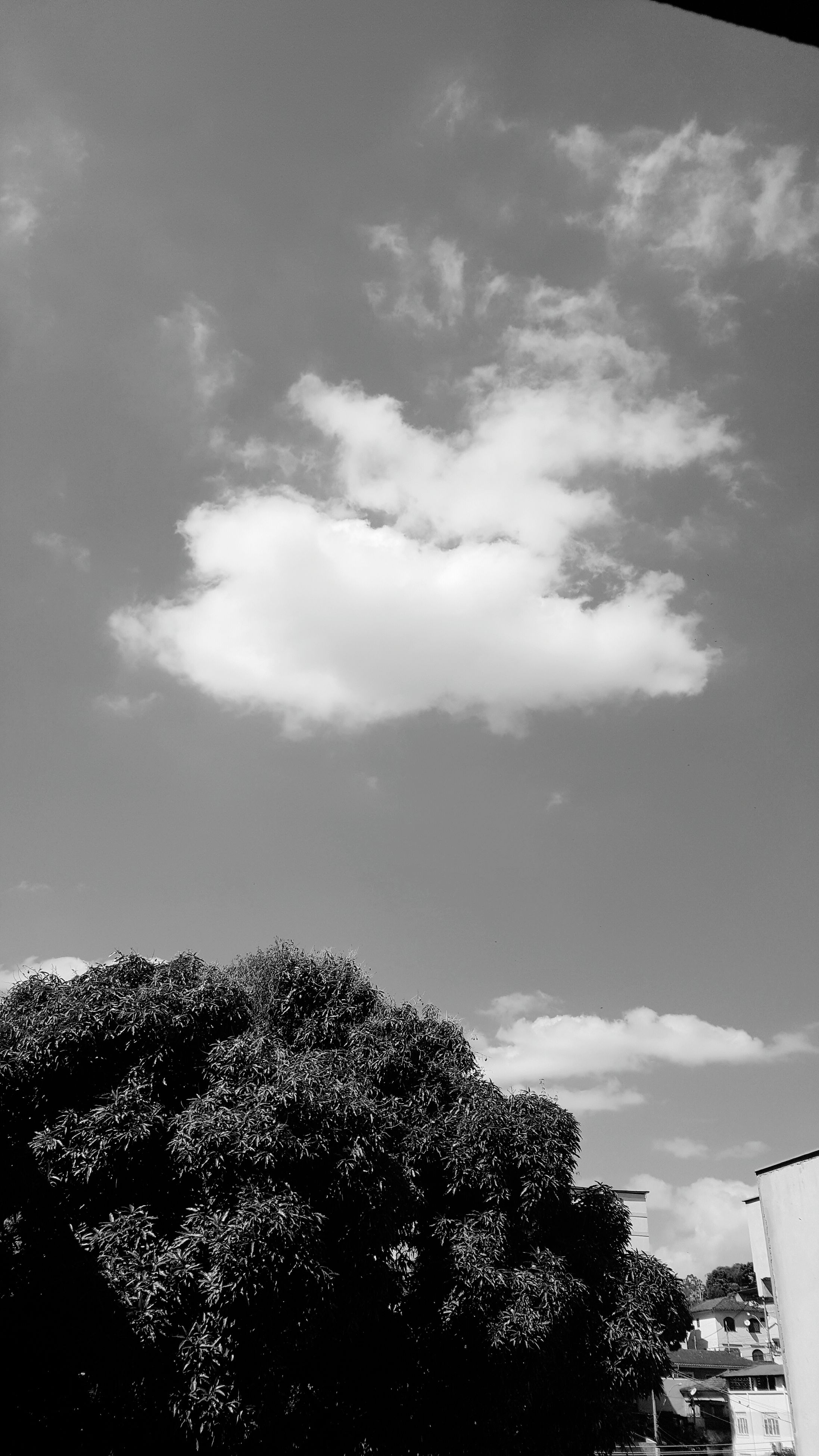 tree, sky, low angle view, nature, no people, outdoors, day, cloud - sky, beauty in nature, tranquility, growth, scenics