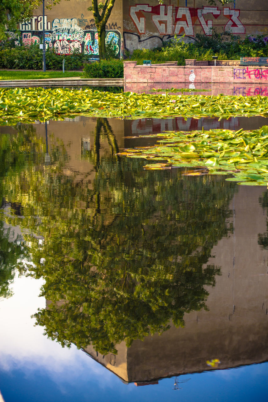 reflection, day, water, nature, outdoors, no people, plant, beauty in nature, waterfront, leaf, architecture, sky