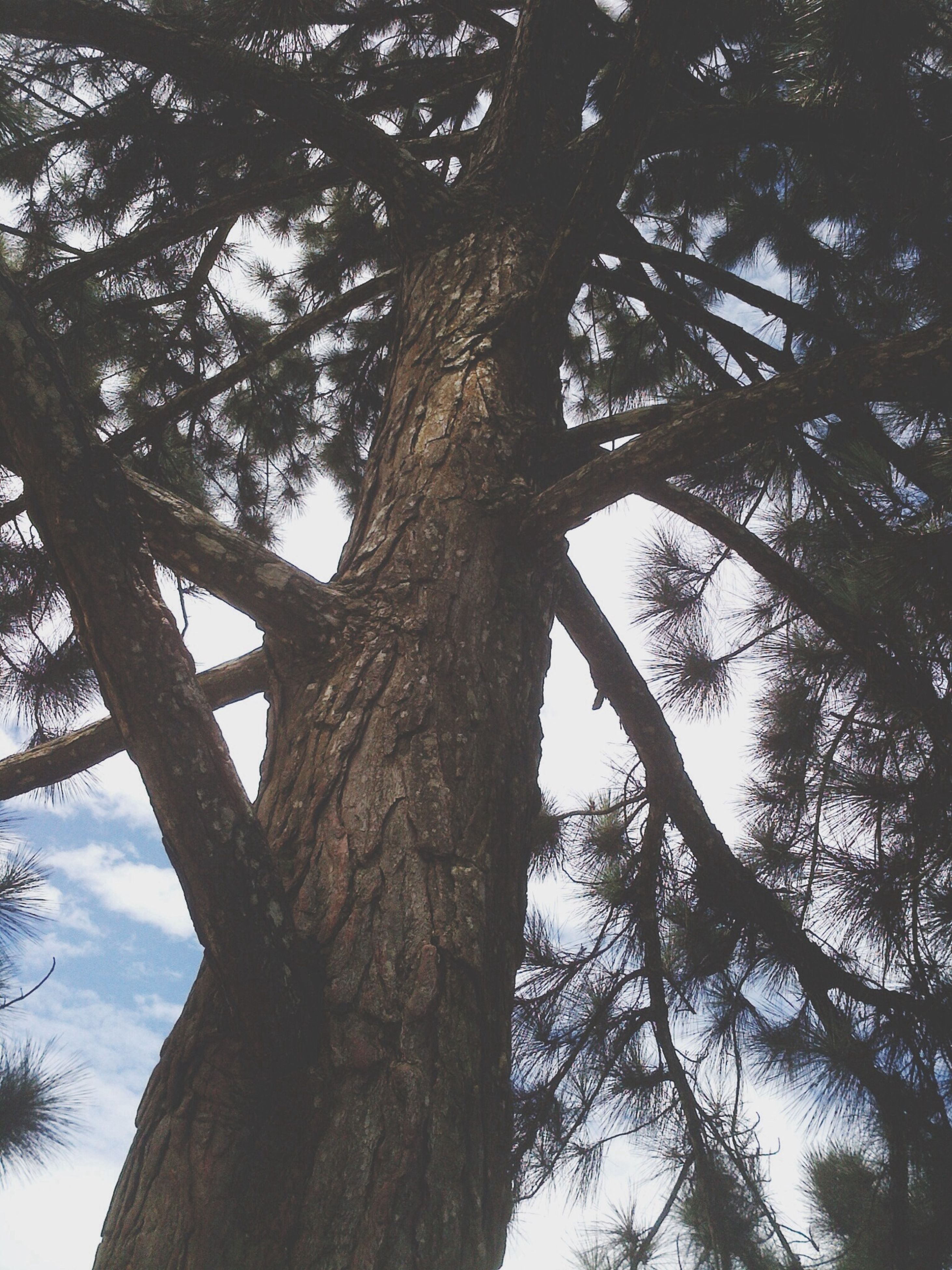 tree, low angle view, branch, tree trunk, growth, sky, nature, tranquility, day, outdoors, beauty in nature, no people, sunlight, wood - material, part of, close-up, textured, scenics, bark, forest