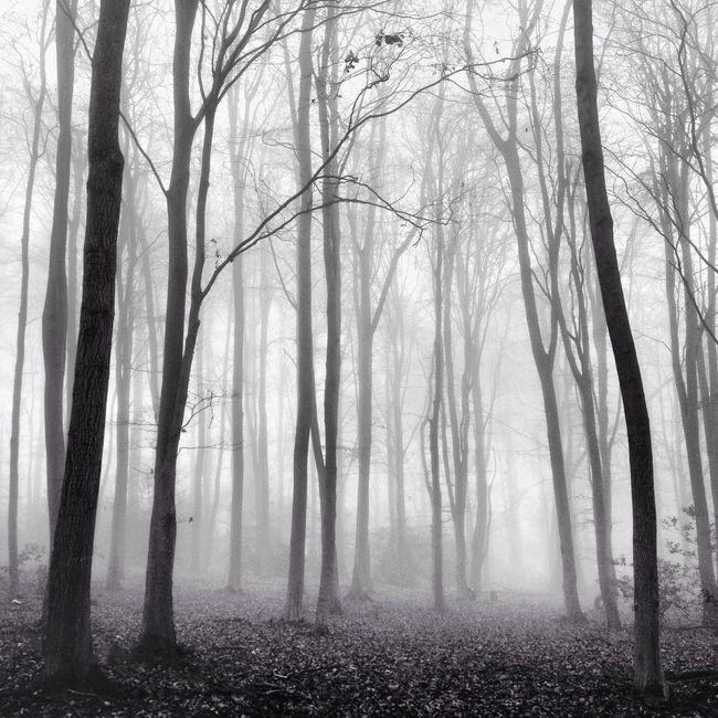 Nebulous Trees Blackandwhite Fog Vscocam
