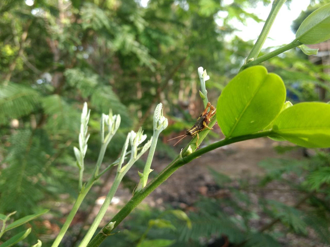 green color, insect, growth, nature, animals in the wild, plant, one animal, animal themes, leaf, outdoors, no people, day, animal wildlife, close-up, beauty in nature, freshness