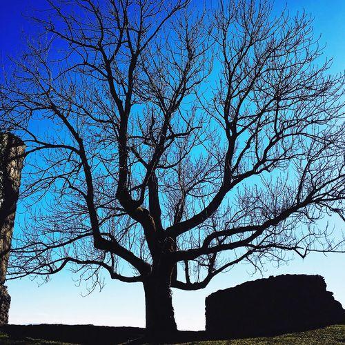 Hohentwiel Burgruine Hohentwiel Burgruine Castle Castles Castle Ruin Autumn Autumn Colors Nature Singenamhohentwiel