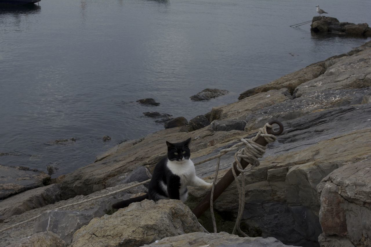 High Angle View Of Cat On Rocks