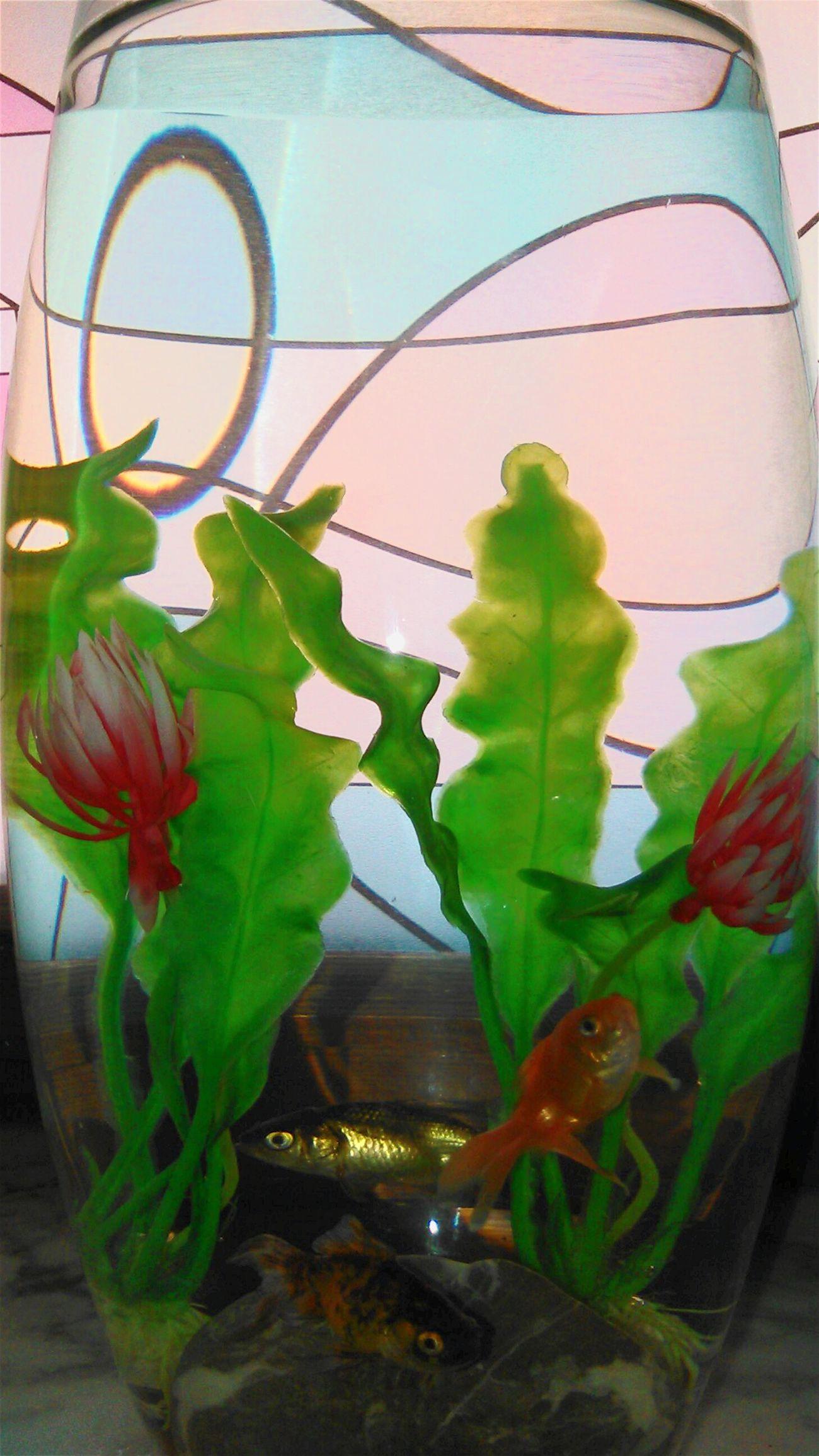 Fish Enjoying Life Photografy Hello World Acquari