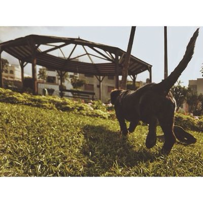 Photogrid Animals Animal Pet appbreeze dog dogs cats photooftheday cute pets instagood animales cute love nature animallovers pets_of_instagram petstagram petsagram vsco vscocam jacko dachshund