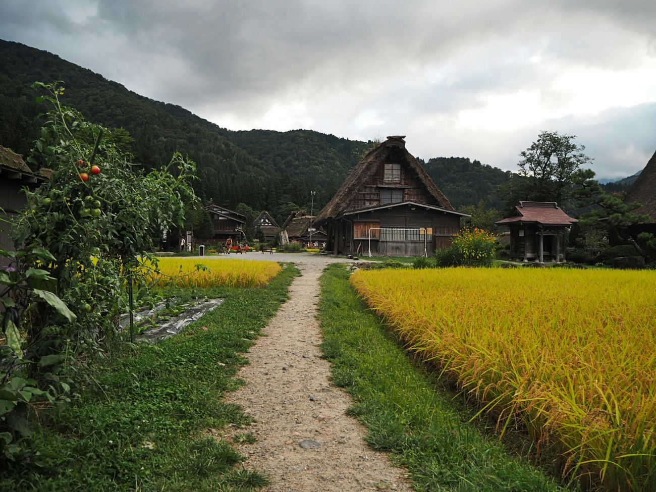 白川郷 Architecture Beauty In Nature Histrorical Building Landscape Traveling Taking Photos Sirakawagou