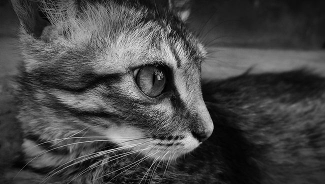 Monochrome Photography Portrait Black And White Texture Details Macro Cuteness Cute Cats Cute Pets Catsoneyeem Cats Lovers  Cats Cateyes