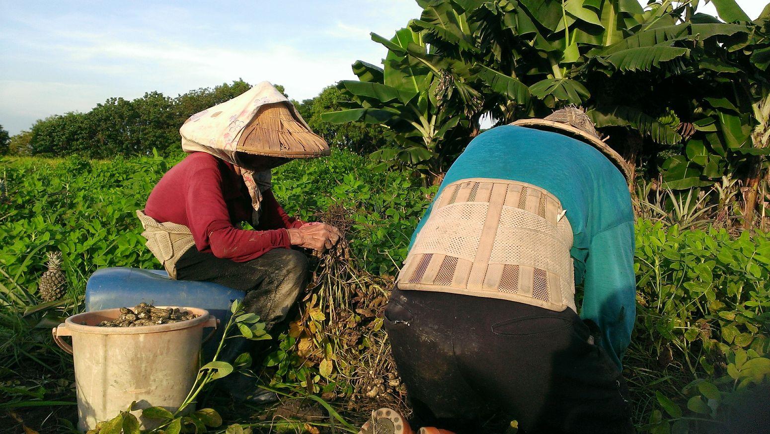 敬天謝地,自食其力~ Our total age, more than 170. The View And The Spirit Of Taiwan 台灣景 台灣情 Taking Photos Garden Nature Love Family Happy People Asian Culture