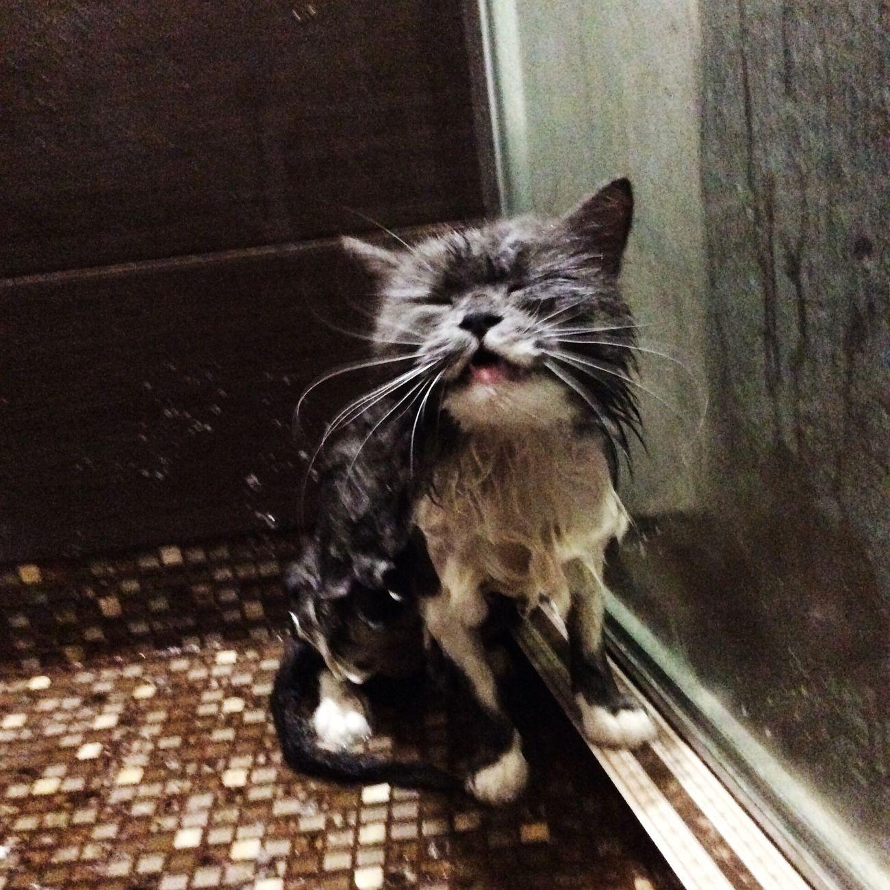 One Animal Cat Pets Animal Themes
