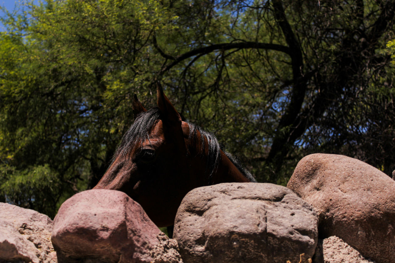 tree, animal themes, mammal, domestic animals, horse, one animal, nature, day, outdoors, no people, livestock, beauty in nature, branch