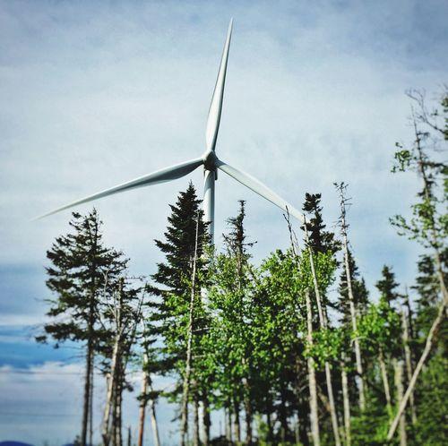 Wind Turbine Trees Renewable Energy