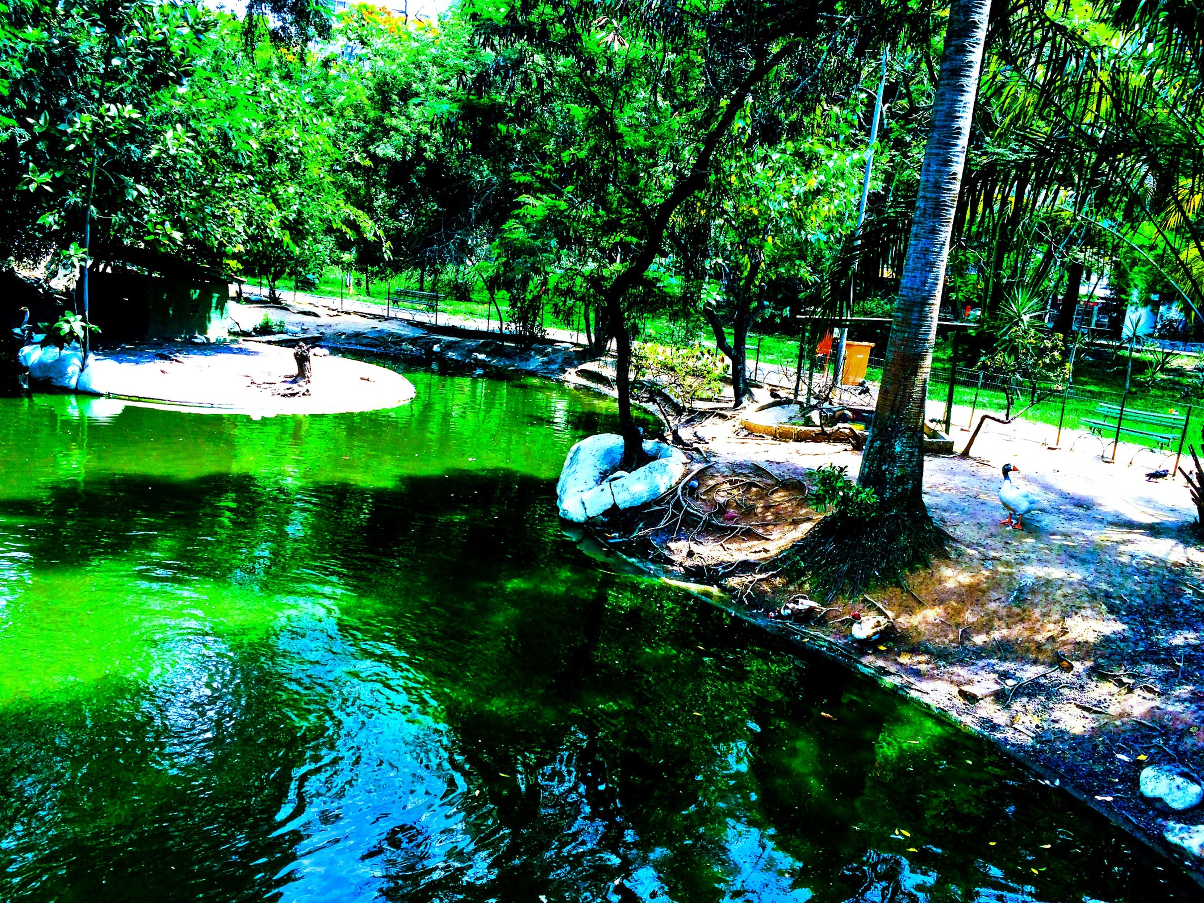 tree, water, reflection, green color, tranquility, growth, river, bridge - man made structure, nature, waterfront, forest, connection, park - man made space, pond, beauty in nature, branch, tranquil scene, tree trunk, day, outdoors