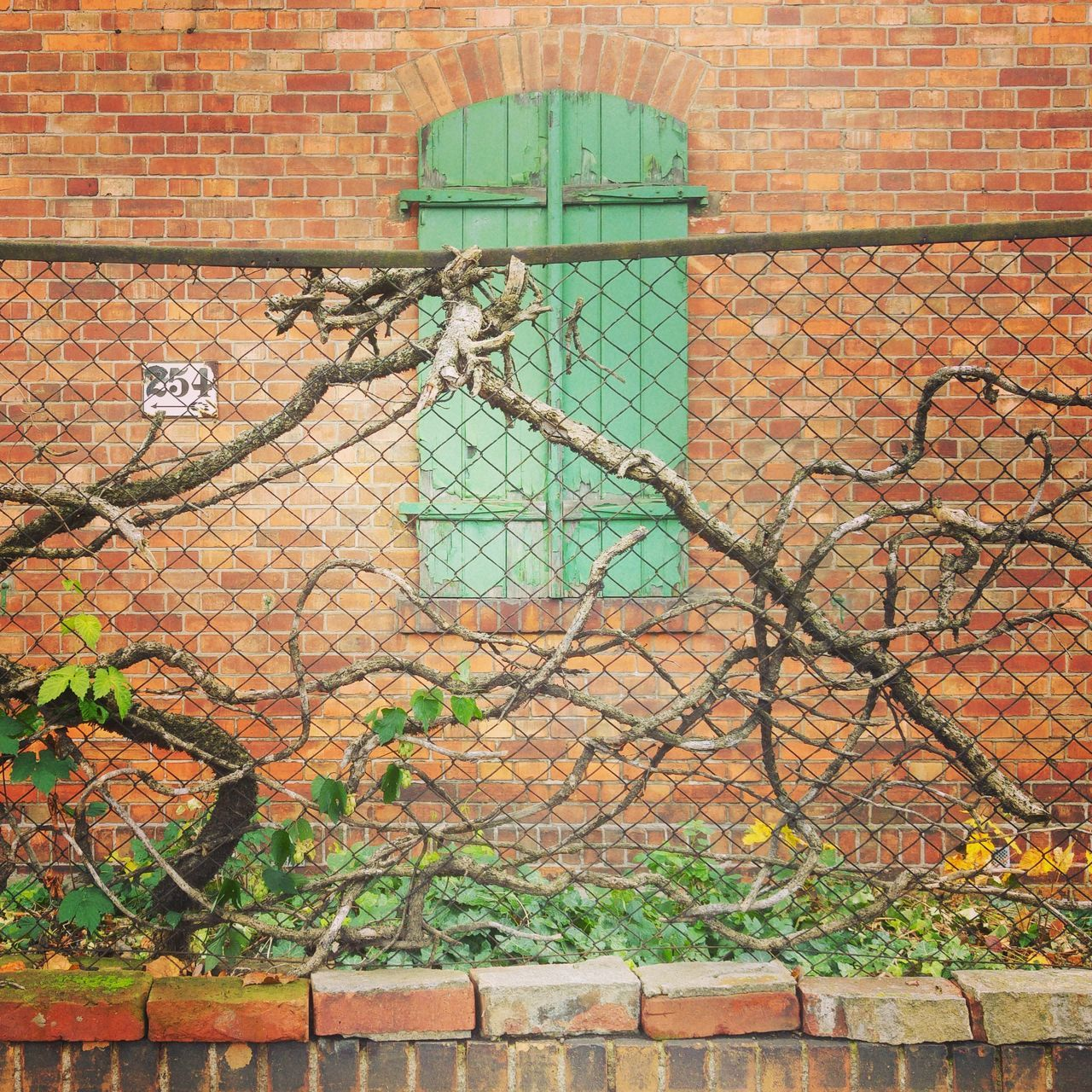 brick wall, building exterior, no people, architecture, built structure, outdoors, day, protection, green color, ivy, plant, bare tree, nature
