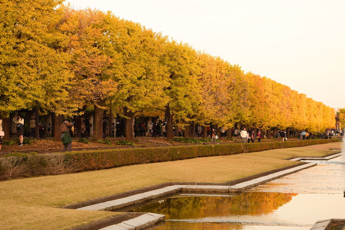 Autumn Autumn Colors Autumn Leaves Day EyeEm Nature Lover Ginkgo Japan Outdoors Park People Sky Sunset Tokyo Travel Destinations Tree