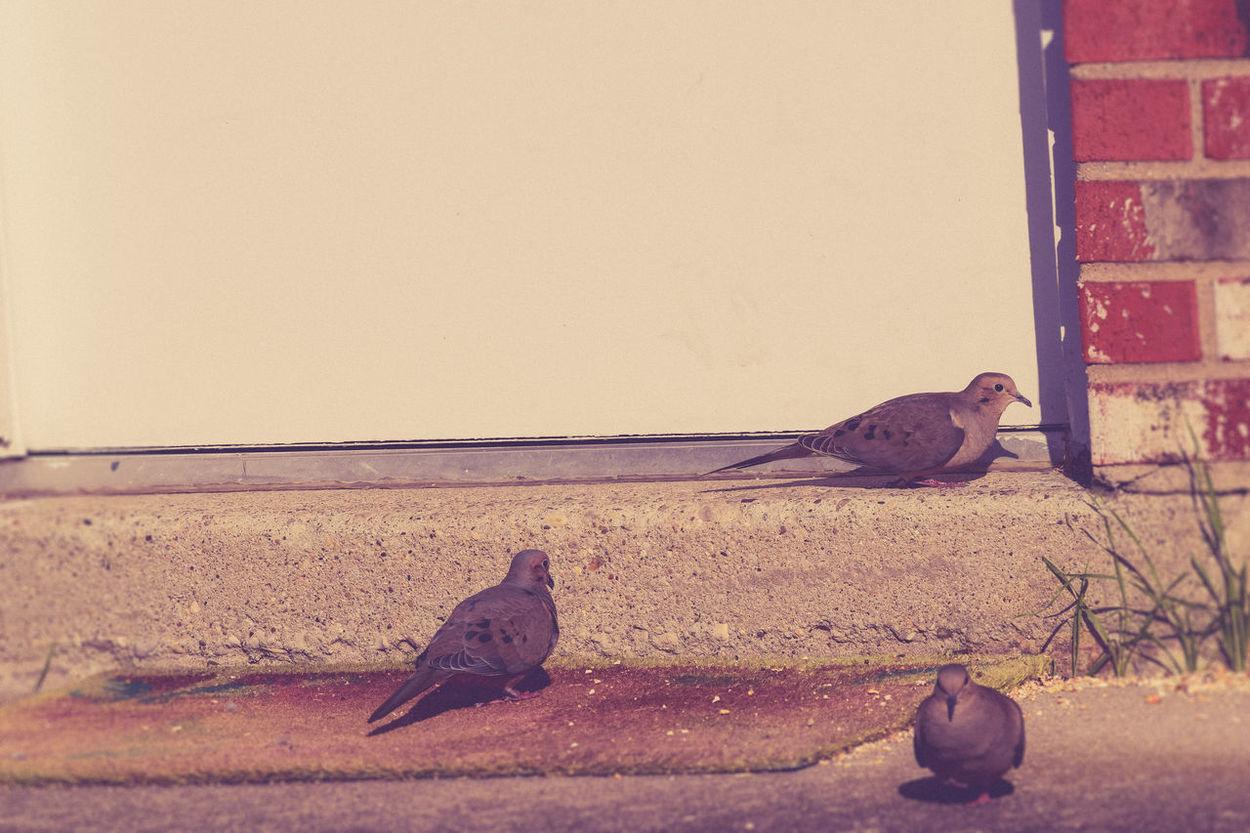 Birds Door Doormat Doorstep Literal Literalism Literally Nature Nature On Your Doorstep Pigeons Step White Door