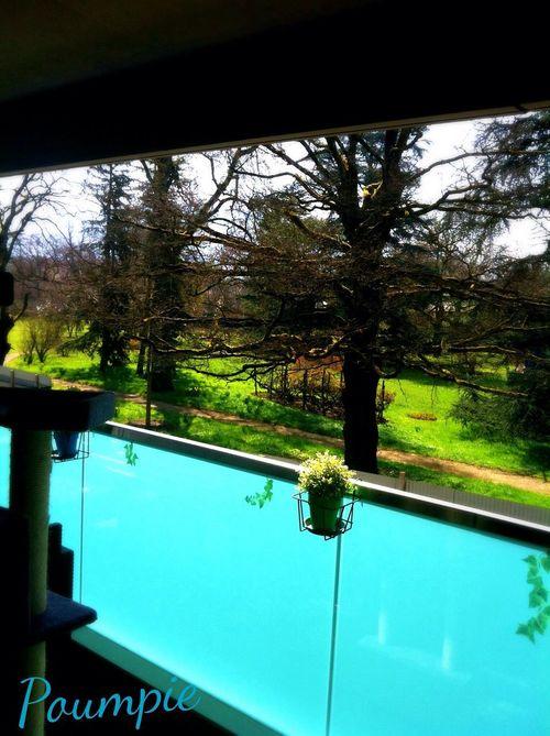 From My Window Par La Fenetre Park il manque que le bruit des petits oiseaux pour illustrer la photo
