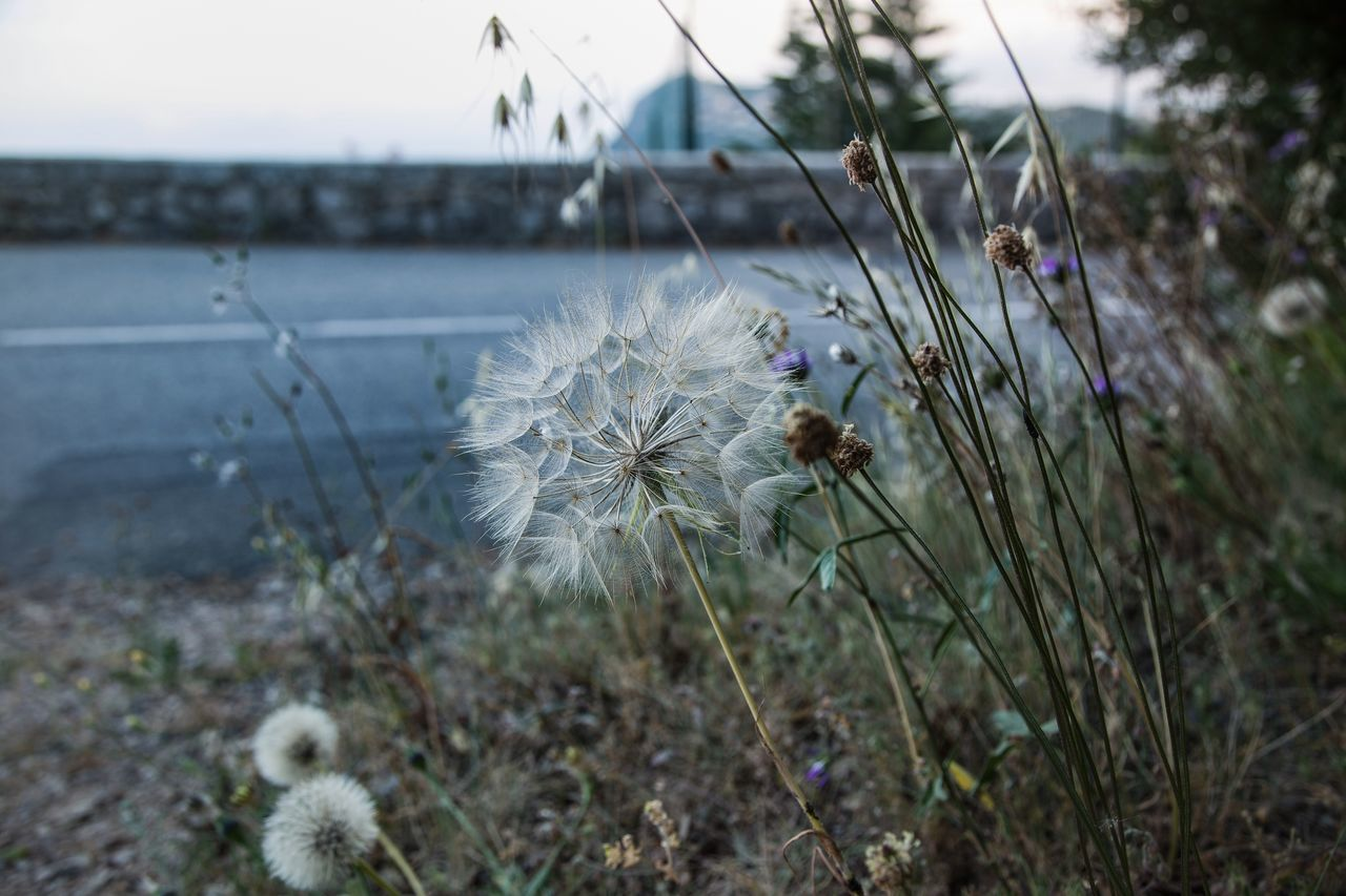 Beauty In Nature Close-up Day EyeEmNewHere Flower Flower Head Focus On Foreground Fragility Freshness Growth Nature No People Outdoors Plant Thistle
