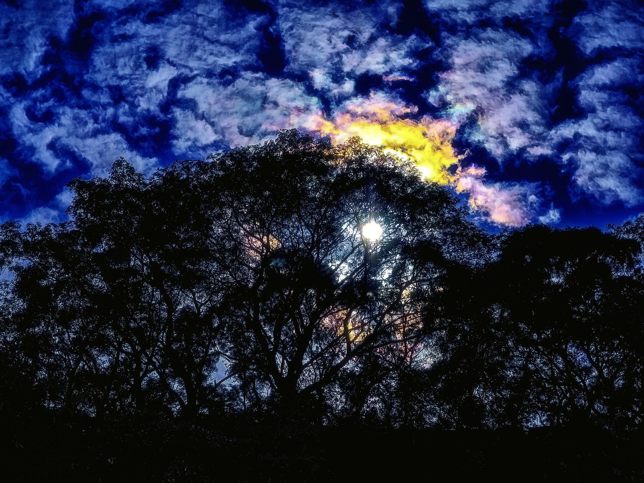 low angle view, night, sky, nature, beauty in nature, tranquility, outdoors, scenics, tree, no people, silhouette, tranquil scene, blue, cloud - sky, star - space, moon, astronomy, space, galaxy