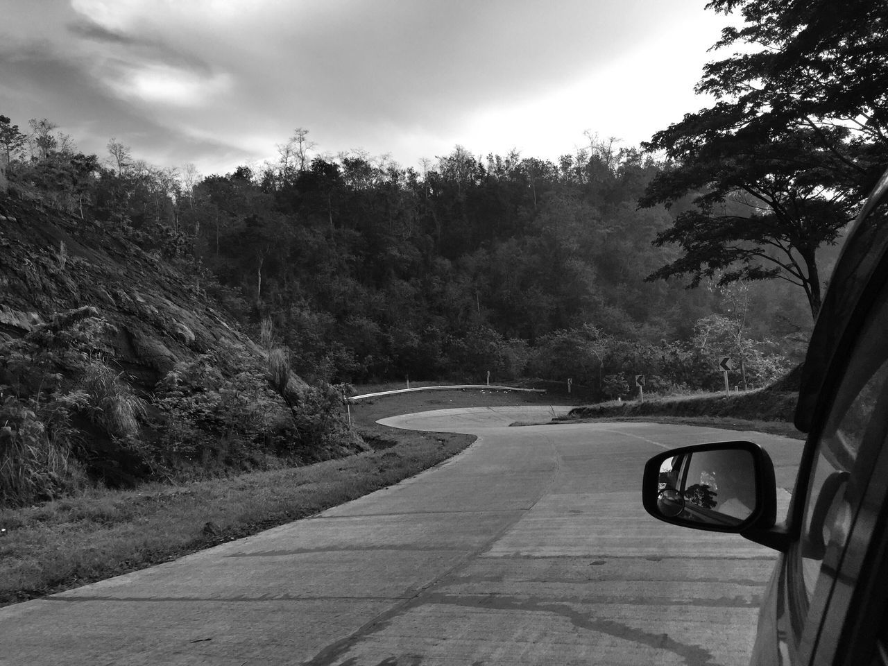 tree, road, transportation, the way forward, day, nature, growth, no people, sky, curve, outdoors, scenics, beauty in nature