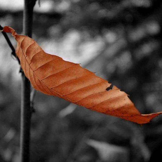 Picsplay Leaf Autumn Winter