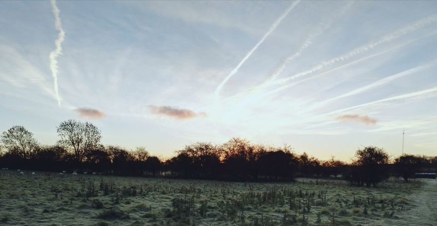 Sky Vapor Trail Nature Tranquil Scene Scenics Beauty In Nature Outdoors Day No People Tree Contrail