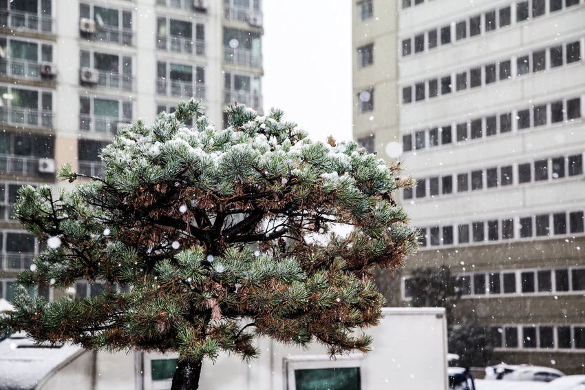 Architecture Balcony Building Exterior Cactus City City Life Day Exterior Flower Pot Green Green Color Growing Growth Leaf Modern Outdoors Plant Potted Plant Residential District Showcase: December Snow Snowing Tree Urban Winter