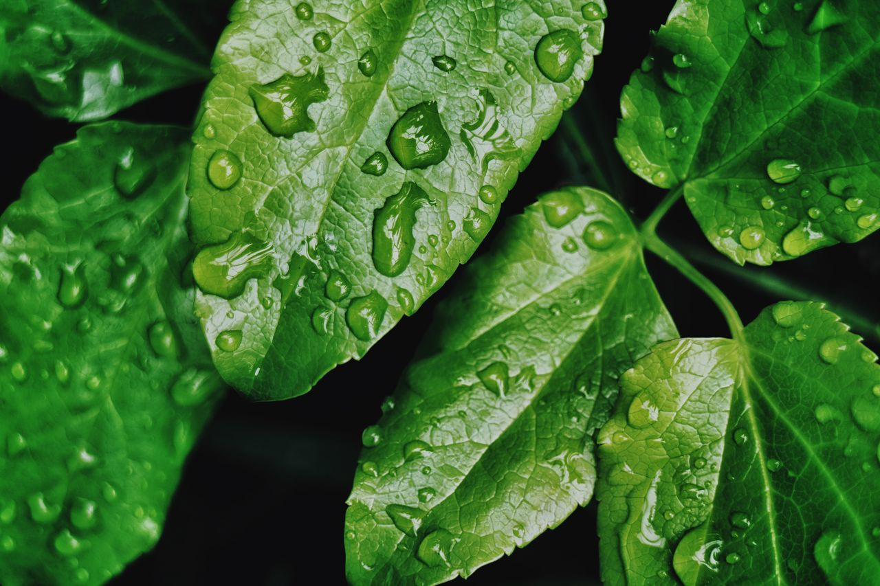 Hello green. Leaf Drop Green Color Wet RainDrop Freshness Water Growth Close-up Nature Full Frame Beauty In Nature No People Plant Day Backgrounds Outdoors Purity Fragility