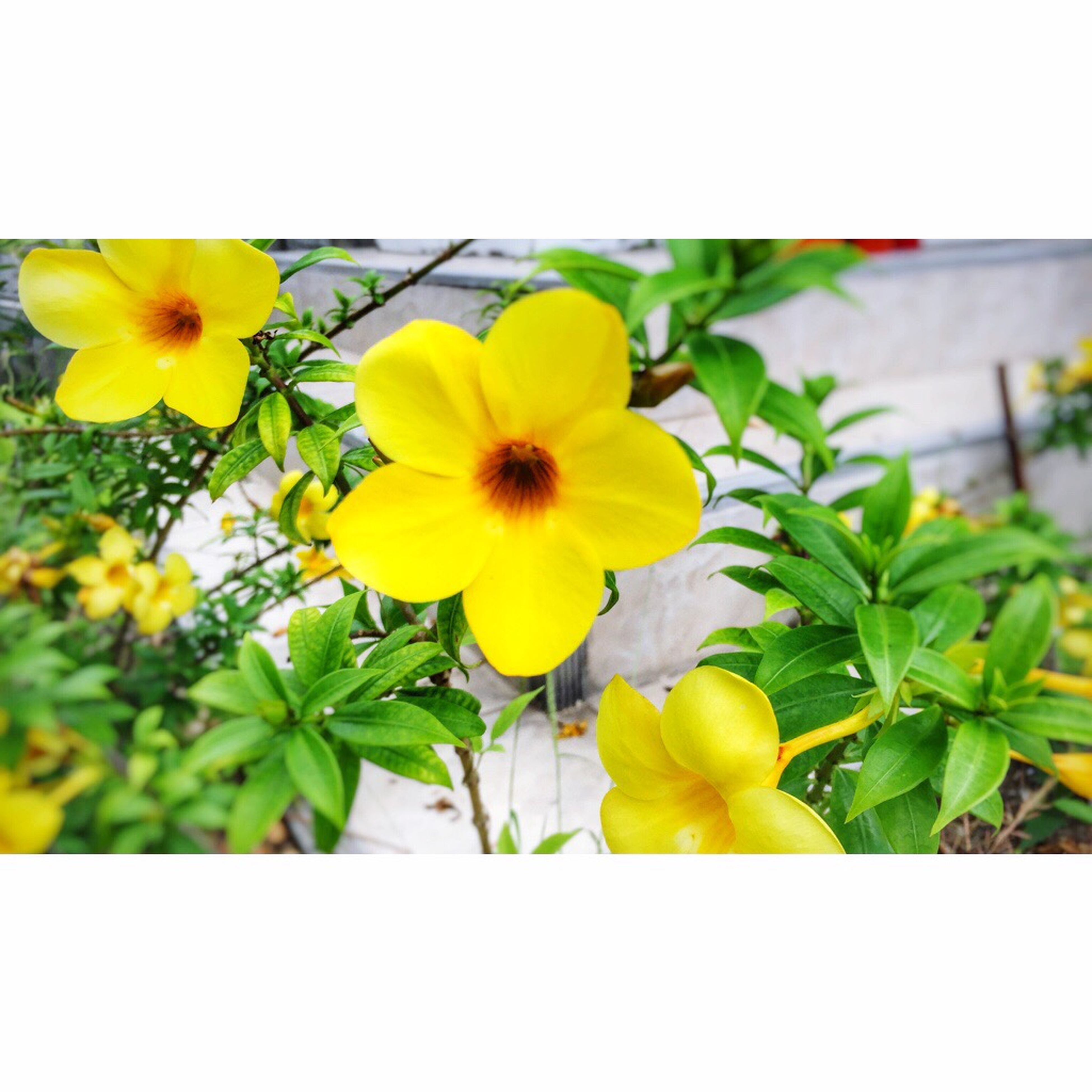 flower, yellow, freshness, fragility, petal, flower head, growth, plant, beauty in nature, leaf, blooming, nature, close-up, green color, focus on foreground, stem, day, in bloom, outdoors, no people, botany, blossom, green, growing, selective focus