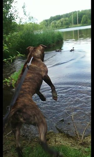 And he spotted life good day over for jaxon....i choose to let u live little duck couple.. Dog Dogstyle