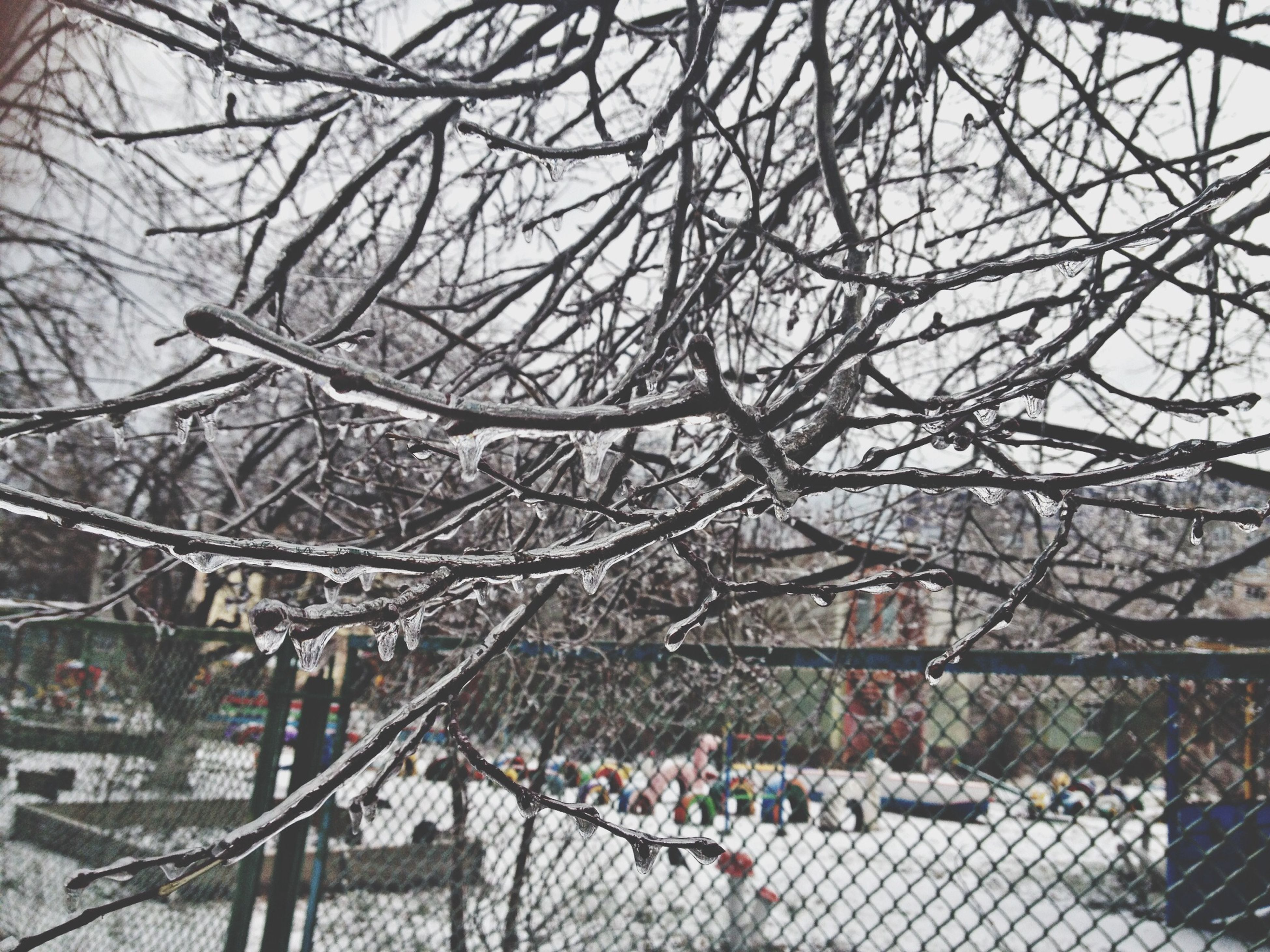 bare tree, fence, tree, built structure, branch, chainlink fence, architecture, building exterior, metal, protection, day, sky, outdoors, winter, city, full frame, pattern, safety, snow, railing