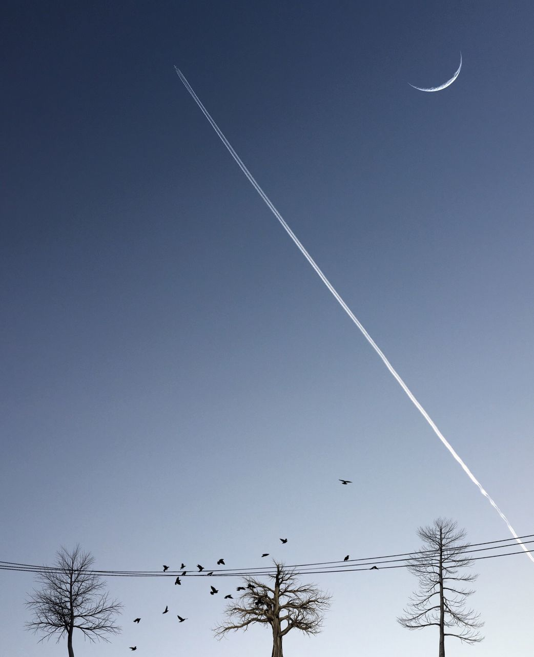 vapor trail, contrail, nature, clear sky, blue, beauty in nature, scenics, moon, low angle view, tranquility, outdoors, no people, sky, tree, day, flying