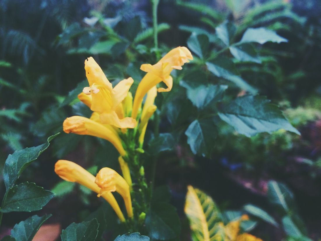 Flower Petal Plant Yellow Fragility Growth Freshness Nature Beauty In Nature Flower Head Outdoors No People Blooming Day Close-up Leaf Paint The Town Yellow
