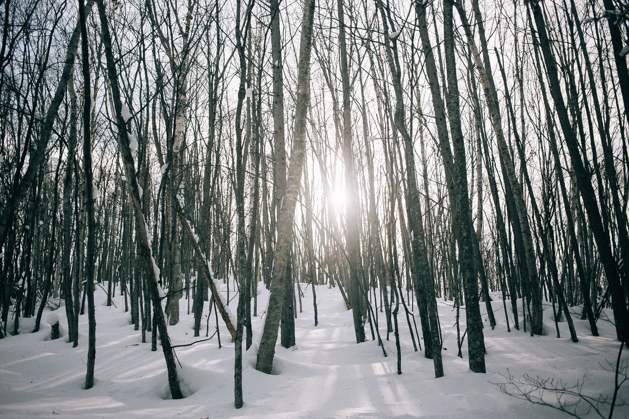 Beauty In Nature Canon Cold Temperature Day Forest Hokkaido Holiday Japan Landscape Nature No People Outdoors Pine Woodland Scenics Sky Snow Sun Sunlight Tourism Tranquil Scene Tranquility Travel Tree Winter Winter