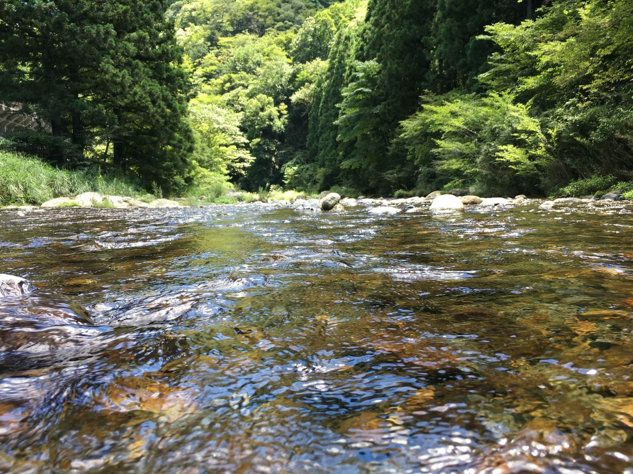 Enjoying Life Hi! Swim 大自然 River 川 清流 Happy Enjoy 癒し 緑 川遊び Clear Stream Superb View Forest River Swim 風景 絶景 Fishing Landscape Riverside
