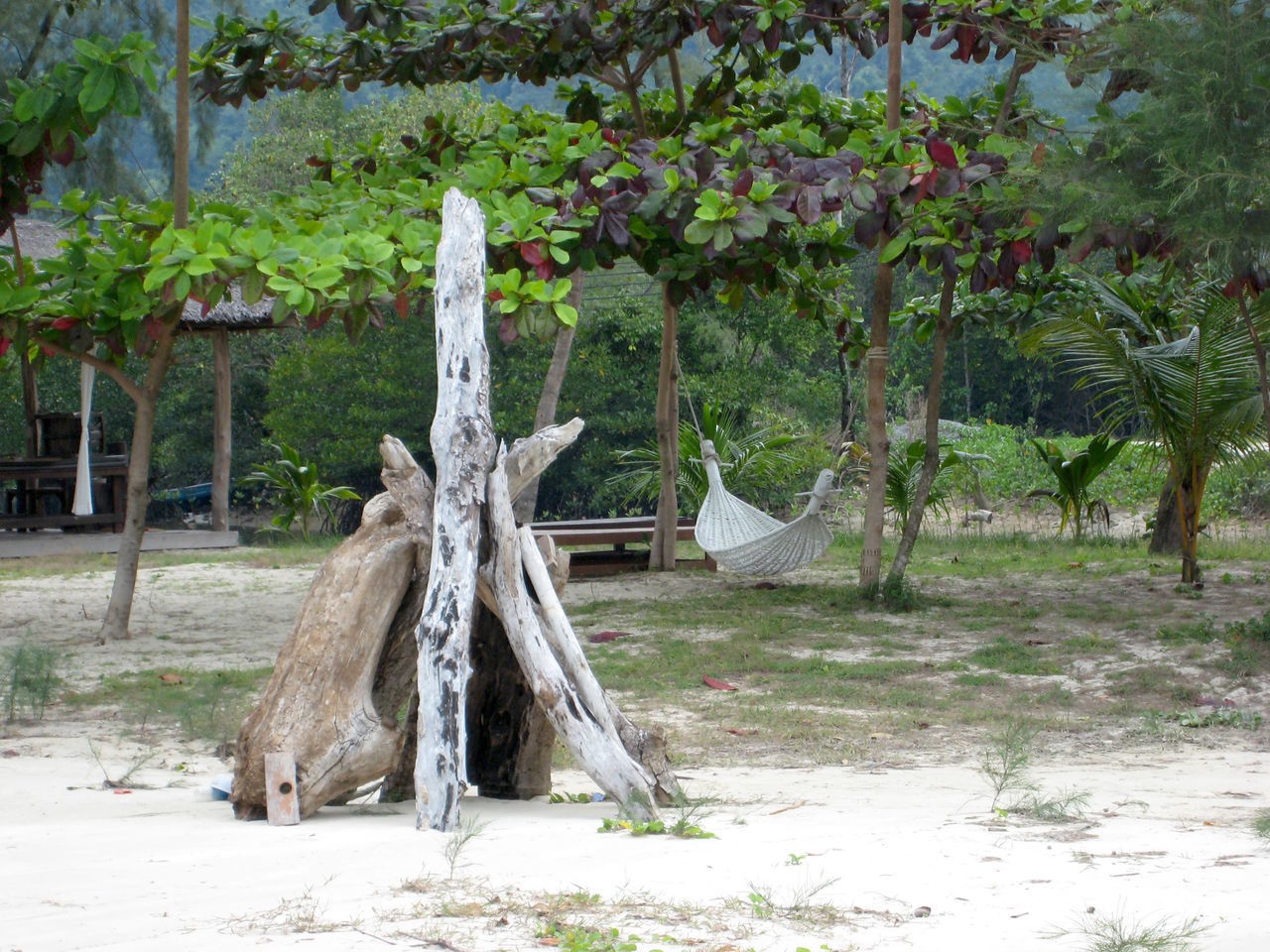 Day Growth Hamak Heavenly Nature No People Outdoors Paradise Tree Tree Trunk Tropic Tropical Plants
