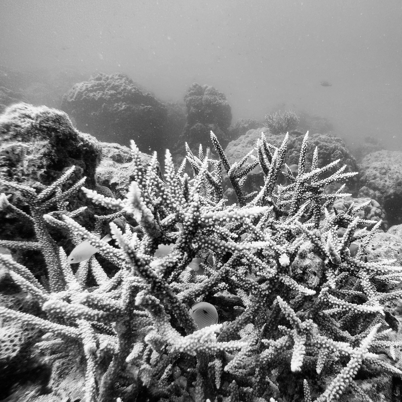 Coral Coral Reef Underwaterphotography Scuba Diving Oceaninspiration Oceanlifestyle Oceanminded_arts Protecting Where We Play Goprooftheday The Great Outdoors - 2016 EyeEm Awards UnderSea Check This Out India