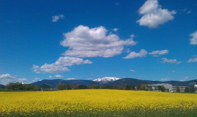 Walking Around Spring Flowers Landschaft Frühjahr