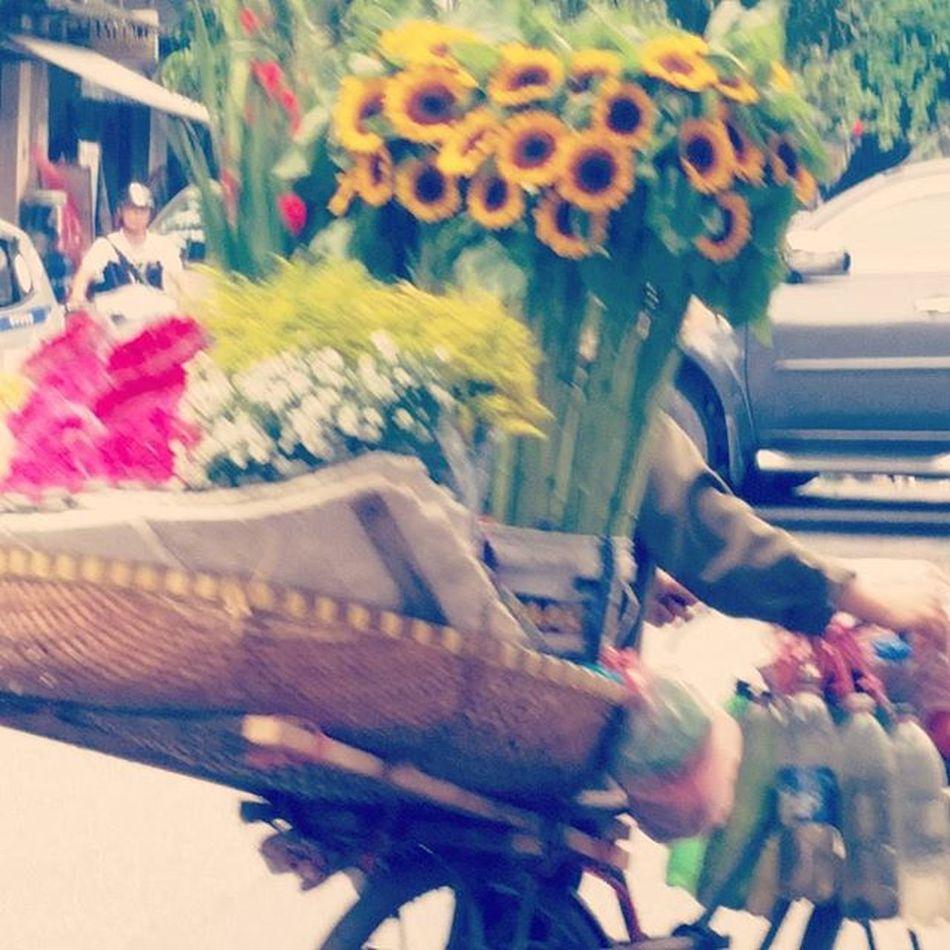 Vietnam Ig_vietnamese Ig_artistry Ig_viet StreetLife_Award Street Streetart Streetstyle Streetphotography Fleuroftheday Floweroftheday Flore Flower Flores Florestaencantada Flowerporn Flowersofinstagram Flowestagram Florestaencantadatop