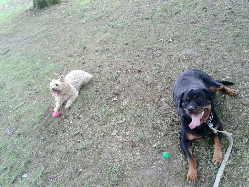 Hunderunde David & Freya Kurzepausedanngehtsweiter My Dogs Are Cooler Than Your Kids Hundeleben
