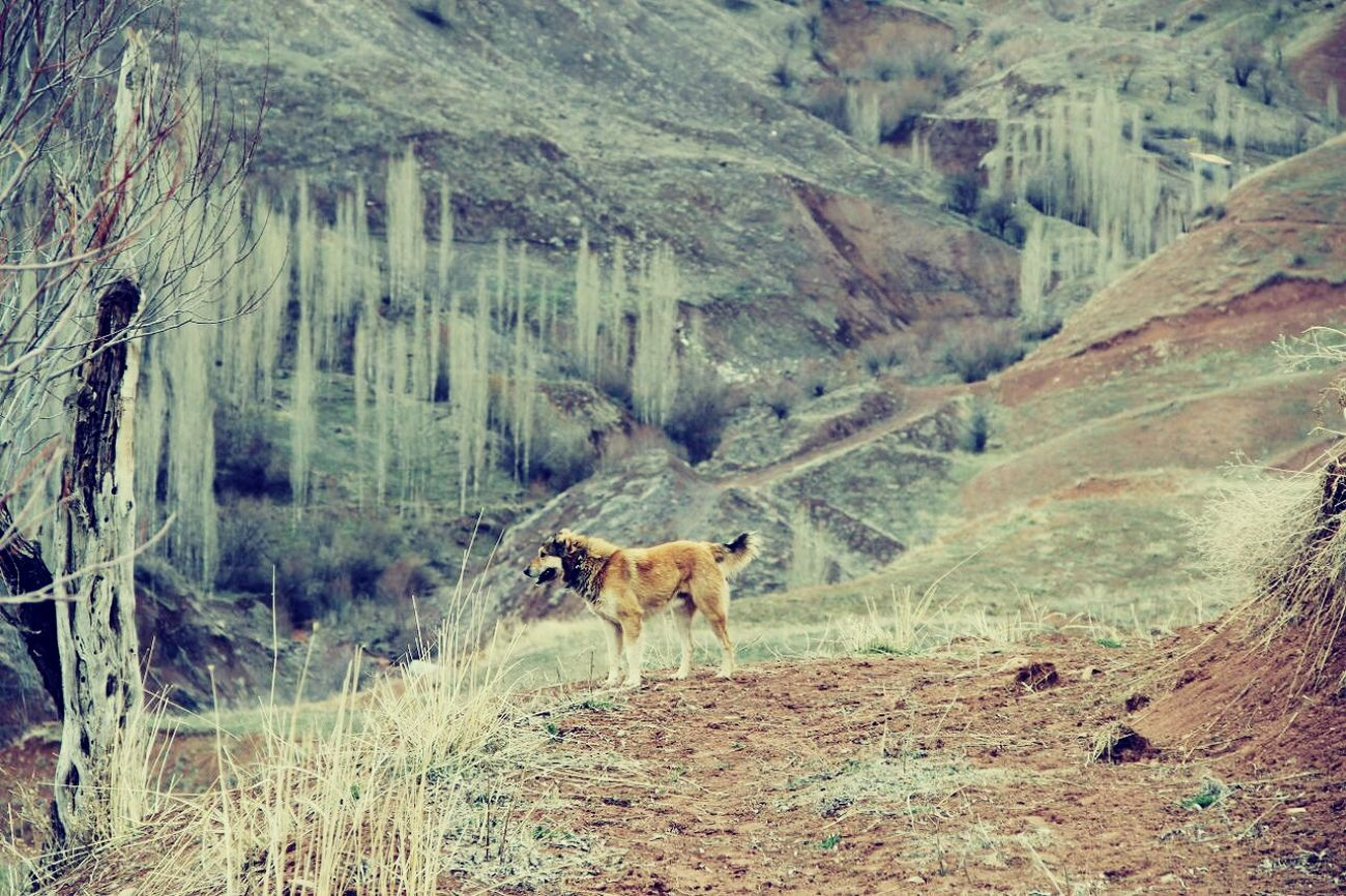 Dog Nature Iran LoveNatureAndMountain