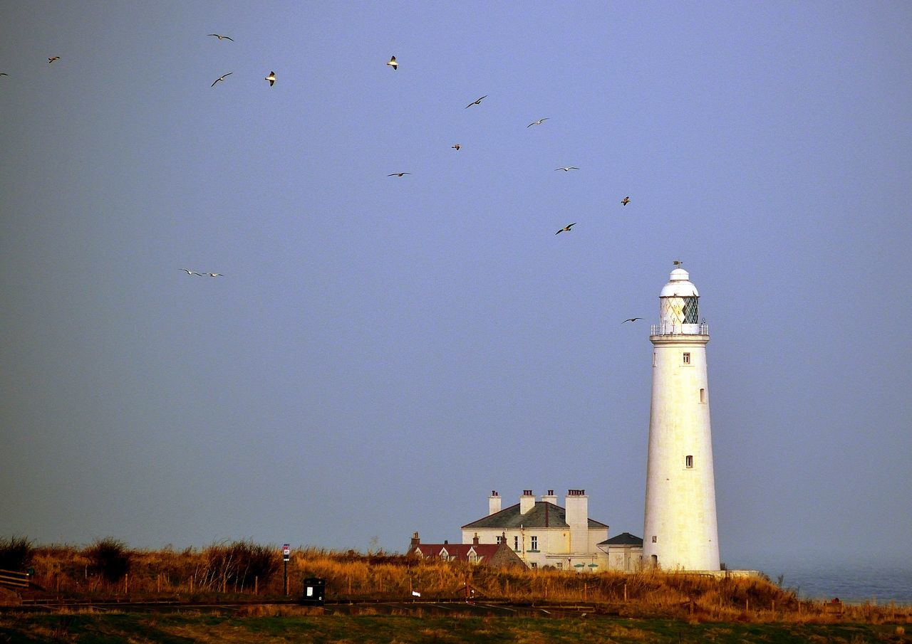 Architecture Bird Building Exterior Built Structure Day England Flying Inghilterra Lighthouse Mare Nature Nikon Nikond3300 Outdoors Photo Photographer Photography Photooftheday Scenic Sea Sea And Sky Sea Life Sea View Seaside Sky