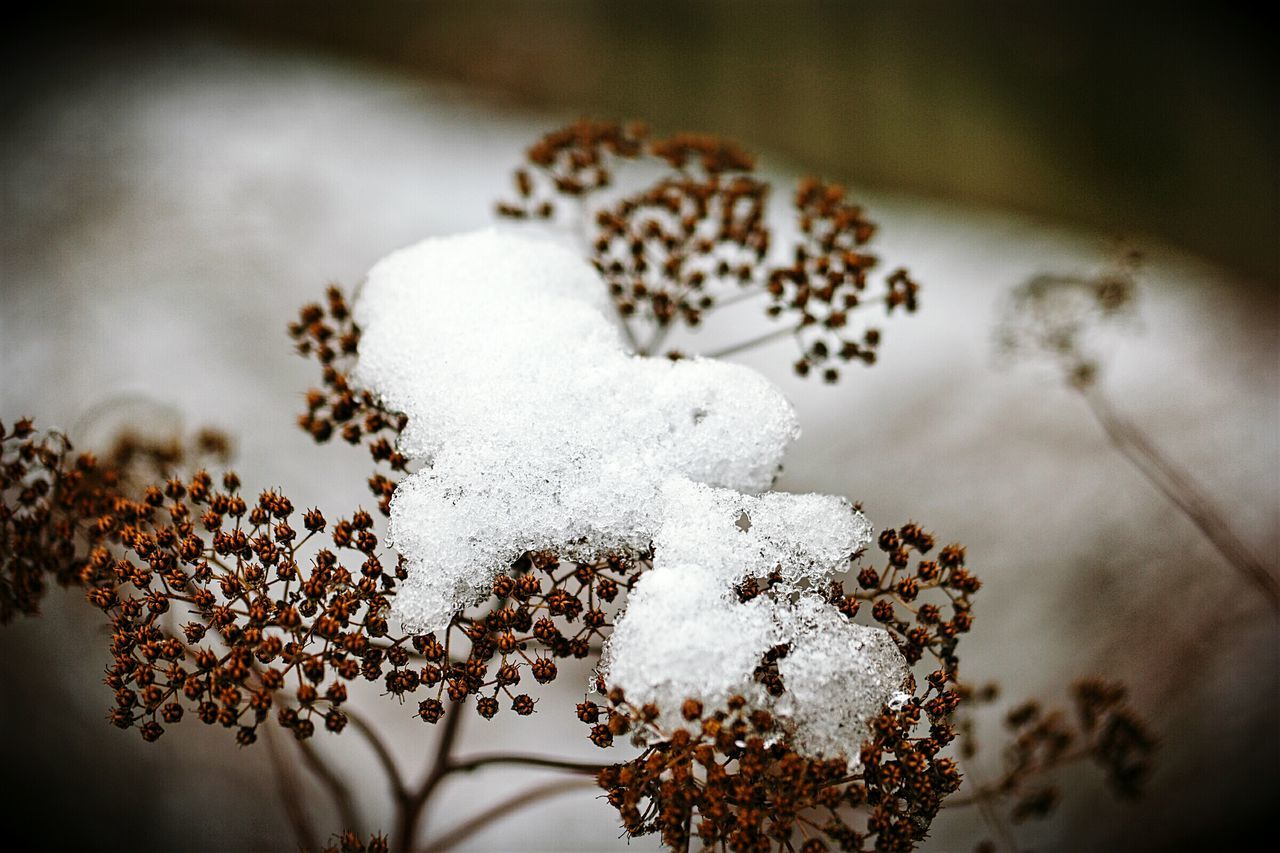 Naturephotography Winter Nature Outside Winter Nature February Winter_collection Nature_collection Snowy Snow Covered Snowcapped Showcase: February Showcase February
